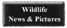 wildilfe news pictures